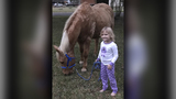 Anonymous donors step in after Liberty County family's horse killed&#x3b;&hellip&#x3b;