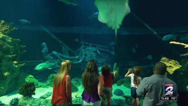 Moody Gardens talks about spring break plans