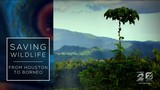 WATCH: 'Saving Wildlife: From Houston to Borneo'