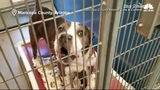 Meet Drew: This is the adorable shelter dog who 'says' hello to the camera