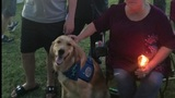 Comfort dogs help communities dealing with mass shootings