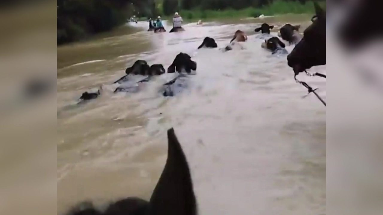Image of: Leader Click2houston Woman Helps Rescue Hundreds Of Animals Stranded During Harvey