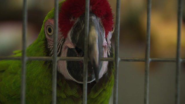 rare birds stolen during pet store s first break in since