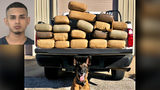 More than 200 pounds of marijuana found by K9 during traffic stop, officials say
