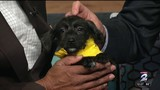 Pet of the week: Cali