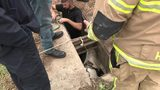 LIVE STREAM: Crews work to rescue pony trapped in southwest Houston storm drain