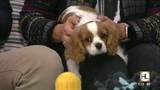 Top 5 priorities for a new puppy   HOUSTON LIFE   KPRC 2