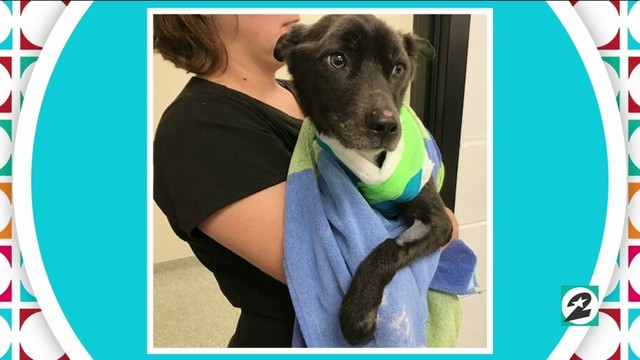 Houston SPCA's amazing animal tale: Sadie   HOUSTON LIFE   KPRC 2