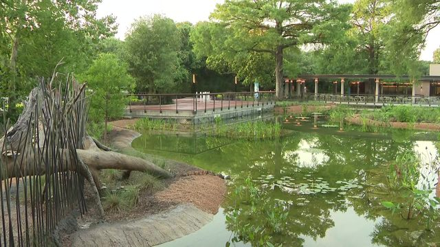 This is what to expect at the Houston Zoo's wetlands exhibit, opening Friday