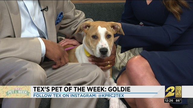 Pet of the week: Goldie