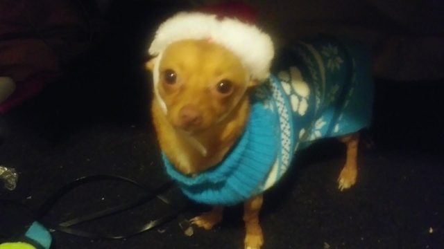 Family's beloved dog found shot, mutilated in Highlands neighborhood, owner says