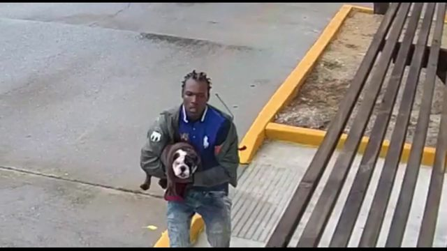 'I'm taking this dog': Man steals $2,500 English bulldog, threatens…