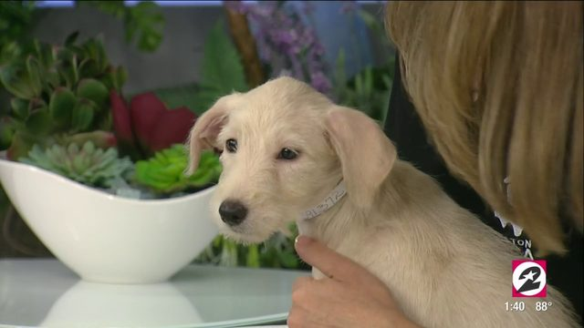 Tex's pet of the week | HOUSTON LIFE | KPRC 2