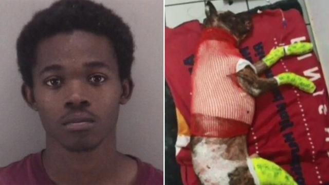 Man who says he set dog on fire: 'I snapped'