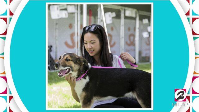 City-wide pet adoption event | HOUSTON | KPRC 2