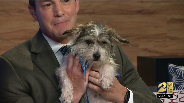 Pet of the week: Bobby