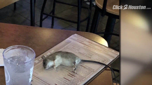 Rat drops onto Houston woman's table at Los Angeles Buffalo Wild wings
