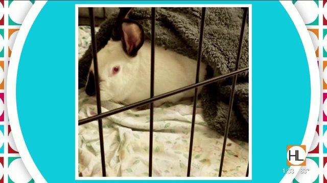 Keira's Amazing Animal Tale | HOUSTON LIFE | KPRC 2