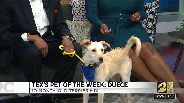 Pet of the week: Duece