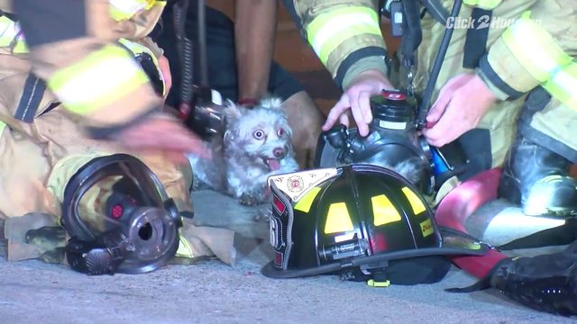 Dogs rescued from fire