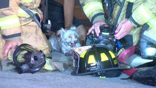Two dogs rescued from fire in northeast Harris County