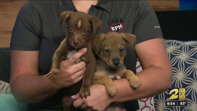 Rescued Pets Movement stops by KPRC2