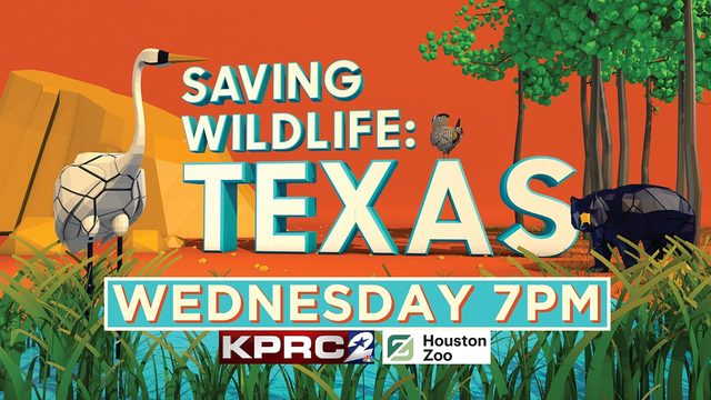 Watch 'Saving Wildlife: Texas' special on KPRC2