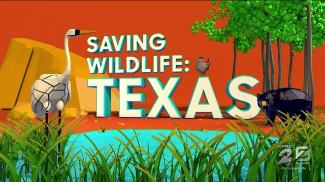'Saving Wildlife: Texas' special on KPRC2