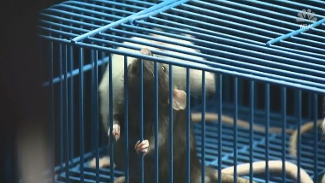 Hundreds of rats removed from home