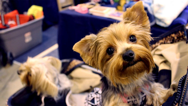 Doggone good time: 3 things to know about Houston World Series of Dog Shows