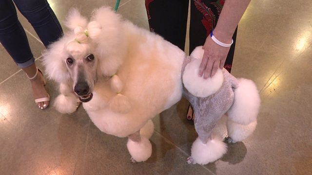 PHOTOS: 42nd annual Houston World Series of Dog Shows