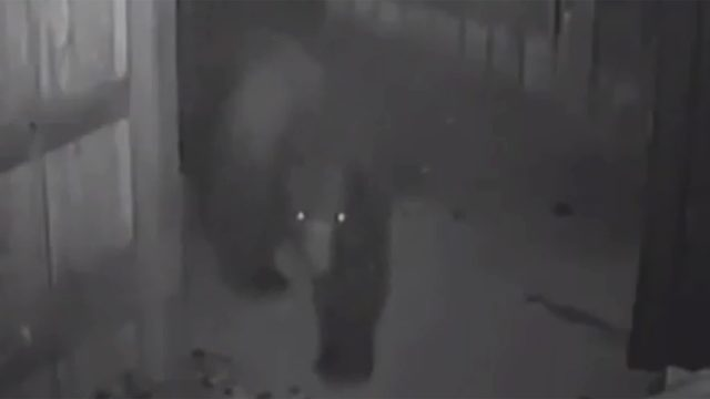 Bear breaks into pot shop dumpster