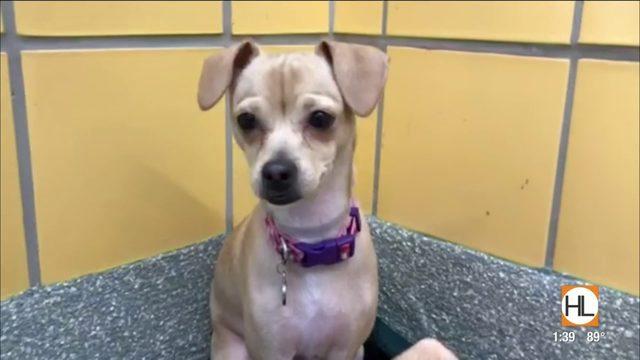 Tex's Pet of the Week: Sophia   HOUSTON LIFE   KPRC2