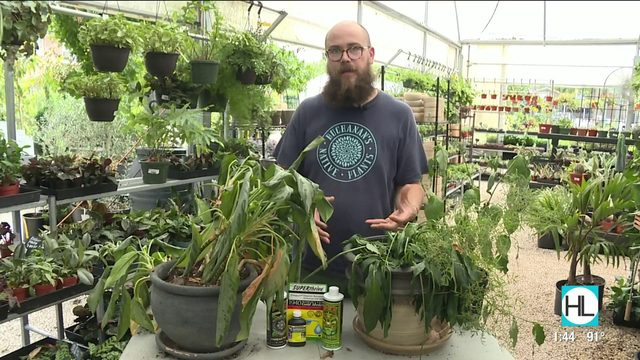 How to revive your nearly dead house plants   HOUSTON LIFE   KPRC 2