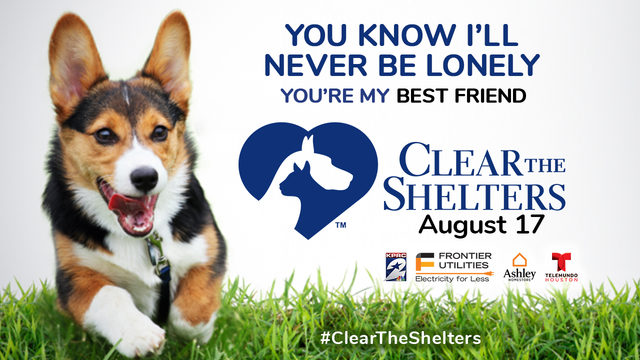 Help us Clear the Shelters 2019
