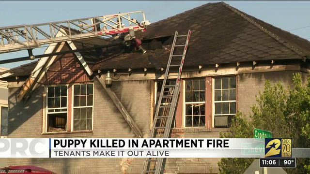 Puppy killed in apartment fire