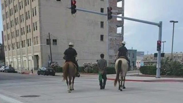 Social media explodes after Galveston officer on horseback escorts…