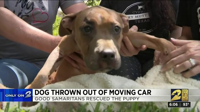 Dog thrown out of moving car