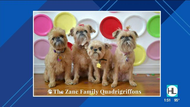 Photo contest looking for Houston's hottest pets | HOUSTON LIFE | KPRC2