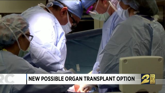 New Possible Organ Transplant Option