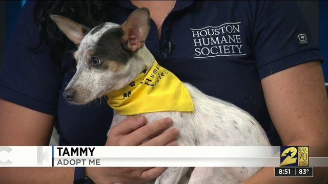 Pet Project: Tammy is looking for a forever home