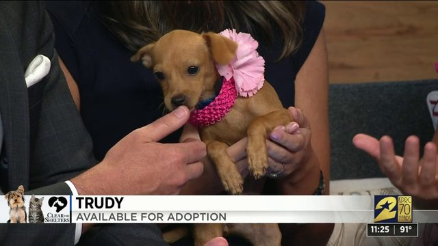 Clear the Shelters: Trudy is available for adoption