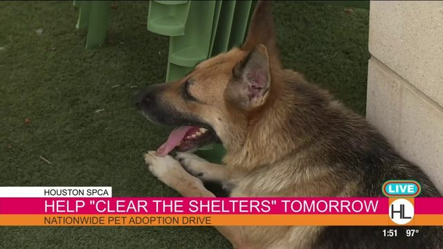 Help 'clear the shelter' at the Houston SPCA | HOUSTON LIFE | KPRC2