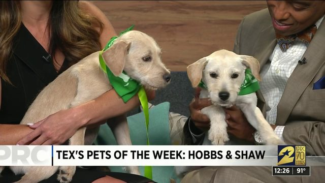 Pets of the week: Hobbs and Shaw