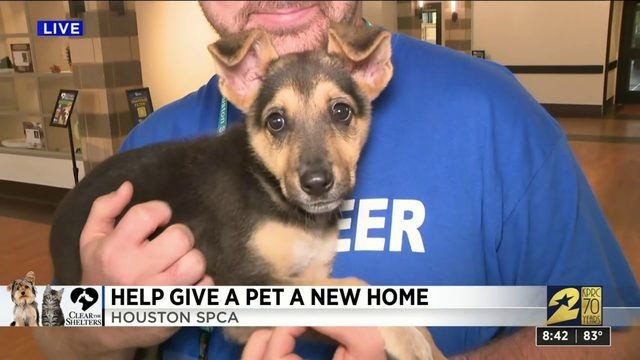 Help us Clear The Shelters today