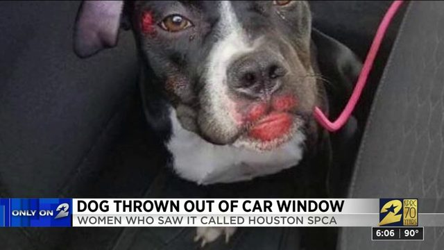 Dog thrown out of car window