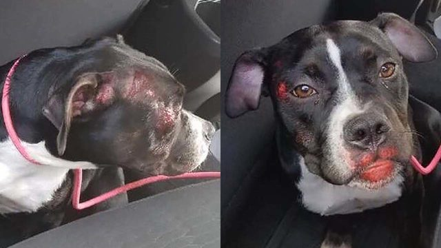 Woman helps puppy thrown from moving vehicle
