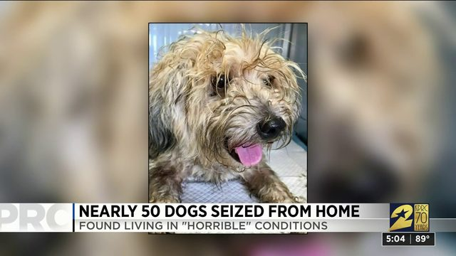 Nearly 50 dogs seized from home