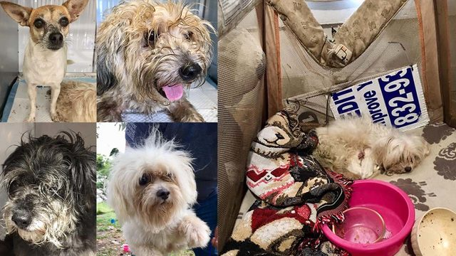 At least 45 dogs seized from 'horrible living conditions' at Matagorda…