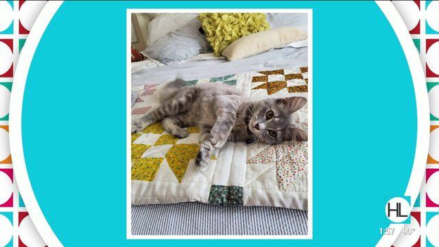 Amazing Animal Tale: Babette | HOUSTON LIFE | KPRC2